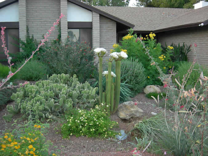 Low maintenance landscaping paradise elite sprinkler for Low maintenance lawn plants