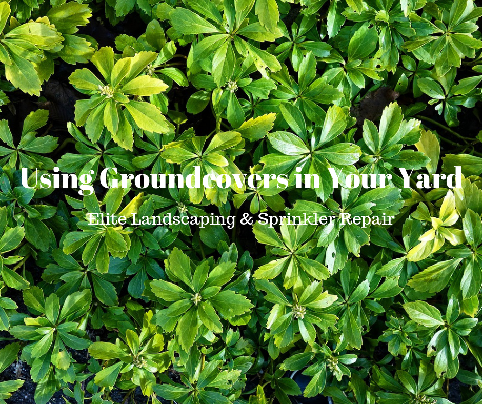 full-service landscaping company